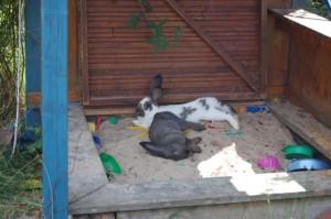 kaninchen hitze