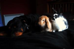 kaninchen hund
