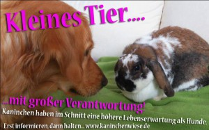 kaninchen-hund-kinder