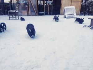 kaninchen im schnee