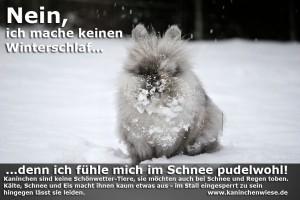 kaninchen-im-schnee-Kopie