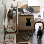 kaninchen im zimmer