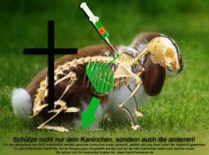 kaninchen-impfung