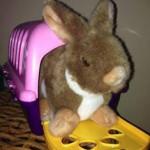 kaninchen in der schule