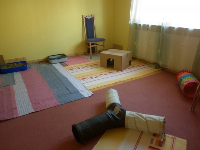 kaninchen in der wohnung kaninchenwiese. Black Bedroom Furniture Sets. Home Design Ideas