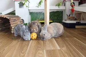 kaninchen intelligenzspielzeug