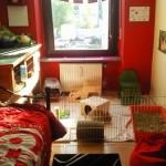 kaninchen jugendzimmer