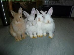kaninchen-jungtiere