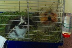 kaninchen-käfighaltung