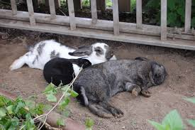 kaninchen kühle erdmulden