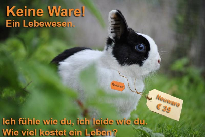 kaninchen-keine-ware-zoohandel