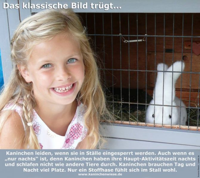 kaninchen kind