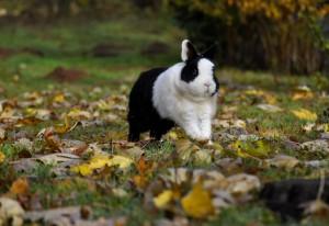 kaninchen-kosten