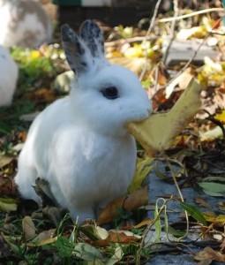 kaninchen laub