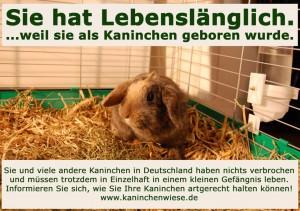 kaninchen-lebenslaenglich