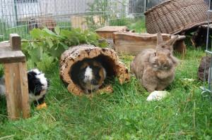 kaninchen-meerschweinchen