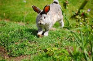kaninchen nachteile innenhaltung