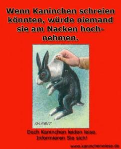 kaninchen-nackengriff