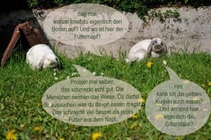 kaninchen-nahrungswechsel