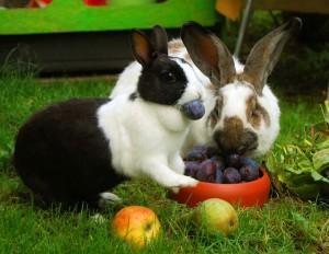 kaninchen-obst