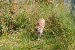 kaninchen-opi