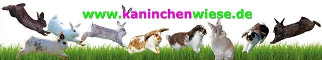 kaninchen-ratgeber-banner
