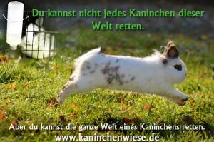 kaninchen-retten