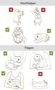 kaninchen richtig heben und tragen2
