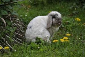kaninchen-schleckt
