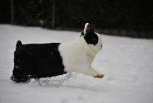 kaninchen schnee