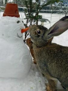 kaninchen schneemann kinder