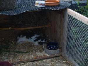 kaninchen-senioren