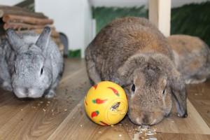 kaninchen snackball