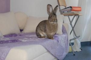 kaninchen sofa