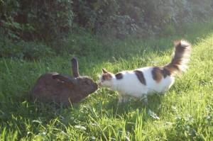 kaninchen sommer