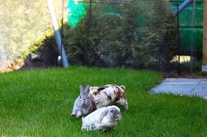 kaninchen sozial