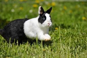 kaninchen springt