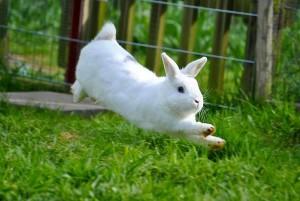 kaninchen sprung
