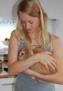 kaninchen streicheln tragen