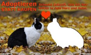 kaninchen-suchen-finden