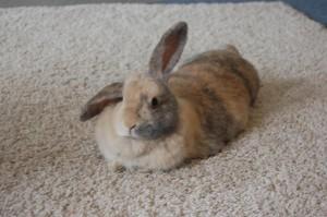 kaninchen teppich