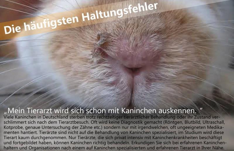 kaninchen tierarzt