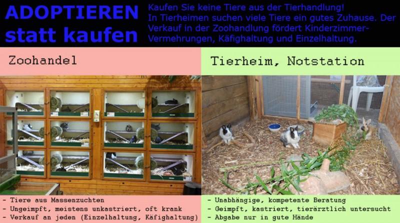 kaninchen-tierhandlung-tierheim