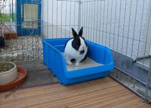kaninchen toilette