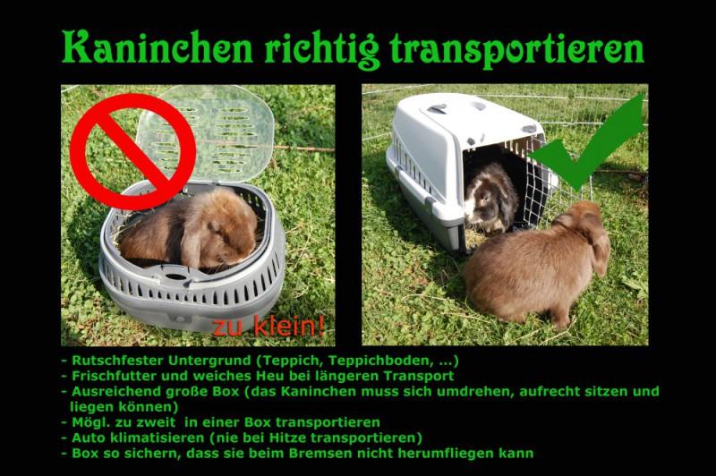 kaninchen-transportieren Kopie