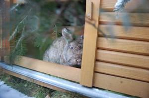 kaninchen-trauert