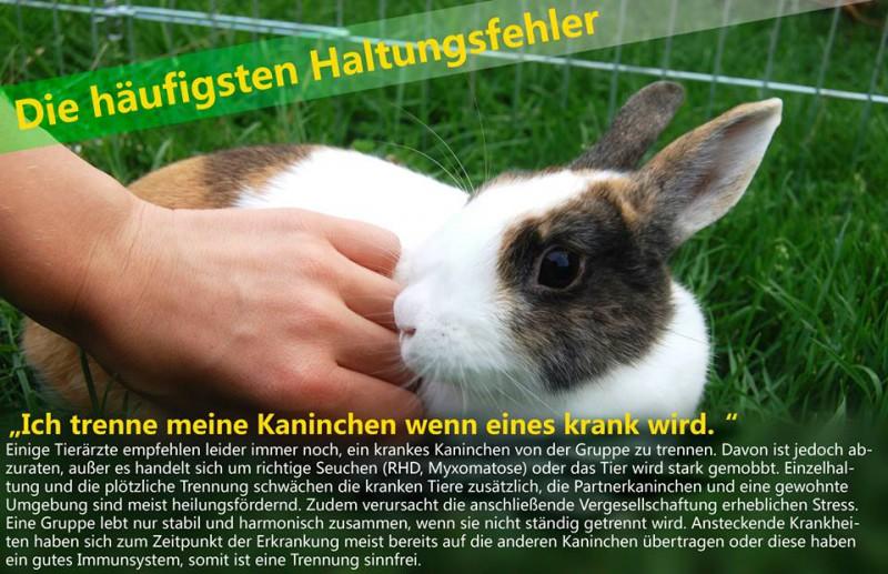 kaninchen trennen krank