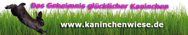 kaninchen-tricks