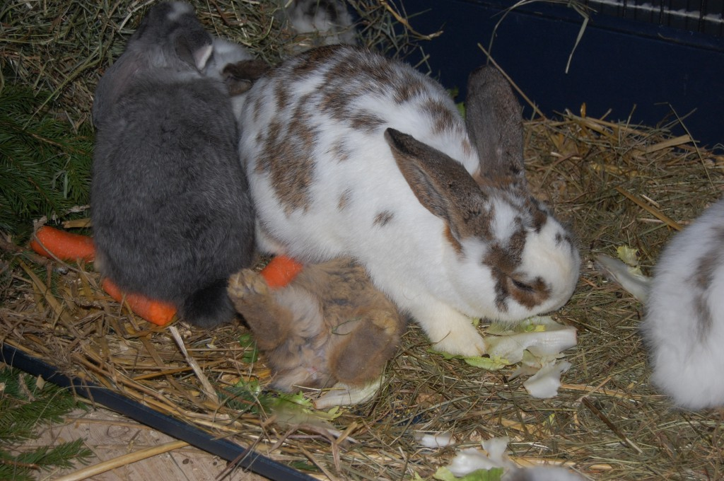 kaninchen trinkt
