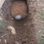 kaninchen tunnel